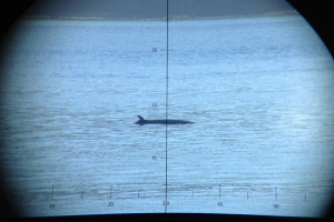 Verifying minke whale presence visually through high powered binoculars