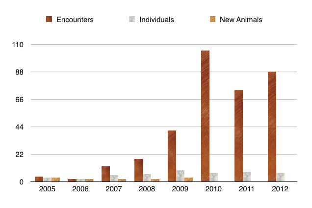 The number of encounters with minke whales, the number of individuals photo-identified and the number of new animals each year from 2005 to 2012 in the northern Vancouver Island area.