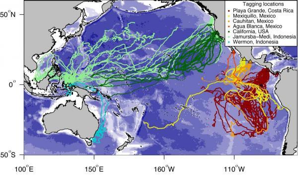 Leatherback tracking data