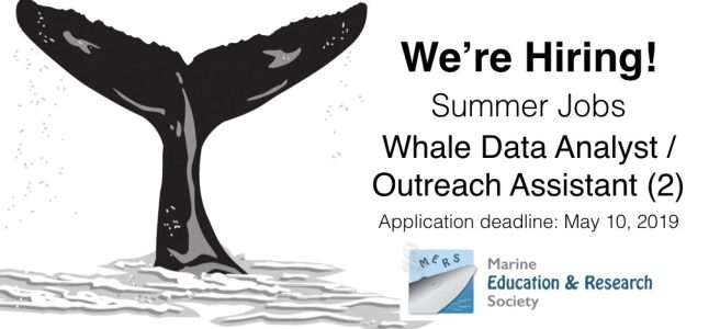 We're Hiring! MERS Summer Jobs  – Marine Education and